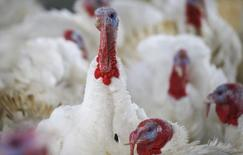 A turkey looks around its enclosure at Seven Acres Farm in North Reading, Massachusetts November 27, 2013, the day before the Thanksgiving holiday in the United States. REUTERS/Brian Snyder