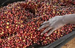 Un trabajador ordena bayas de café en Kienjege, Kenia, jul 24 2014. Volcafe, la división de café del corredor de materias primas ED&F Man con sede en Suiza, dijo en un reporte de noviembre al que accedió Reuters el viernes que el déficit global de café aumentará a 10 millones de sacos de 60 kilos en el actual año de cosecha 2014/15.   REUTERS/Thomas Mukoya