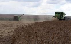 Trabalhadores colhem soja em fazenda em Primavera do Leste, Mato Grosso. 29/01/2013 REUTERS/Paulo Whitaker