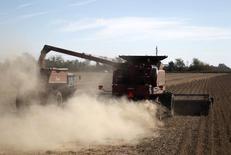 Un sojal en un campo en Chacabuco, Argentina, abr 24 2013. La soja y el maíz del ciclo 2014/15 se encuentran en muy buen estado en la zona agrícola central de Argentina gracias a lluvias recientes, que fueron seguidas de períodos secos, mientras que en los próximos días llegarían más precipitaciones favorables, dijeron expertos climáticos.          REUTERS/Enrique Marcarian
