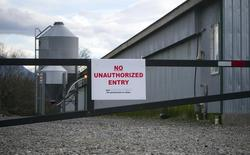 File photo of a poultry farm under quarantine due to bird flu, or avian influenza, in Chilliwack, British Columbia taken on December 8, 2014. REUTERS/Ben Nelms