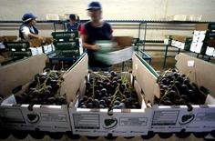 Imagen de archivo de trabajadores empacando fruta en una planta en Talagante, 40 km al sur de Santiago. 28 marzo, 2005. Un conflicto laboral en los puertos de la costa oeste de Estados Unidos ha llevado a exportadores chilenos de fruta a enviar su carga por otras terminales, lo que ha aumentado el tiempo de llegada al mercado norteamericano, dijo el lunes la Asociación de Exportadores de Chile (ASOEX). REUTERS/Ivan Alvarado