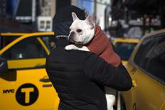 Luke, a French bulldog, is carried by his owner Paul from New York City outside the Pennsylvania Hotel in New York City ahead of the139th Westminster Kennel Club's Annual Dog Show in the Manhattan borough of New York February 15, 2015. REUTERS/Mike Segar