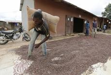 A man carries a cocoa bag while walking over cocoa beans left out to dry in Niable, at the border between Ivory Coast and Ghana, June 19, 2014. Picture taken June 19, 2014.        REUTERS/Thierry Gouegnon