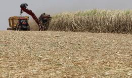 En la imagen, plantaciones de caña de azúcar son recolectadas en  Valparaiso, al noroeste de Sao Paulo. 19 de septiembre, 2014. La cosecha de caña de azúcar del centro sur de Brasil produciría 31,8 millones de toneladas de azúcar en la temporada 2015/2016, menos que en la temporada 2014/15 que está terminando y que rindió 32 millones de toneladas, dijeron el martes analistas de F.O.Licht. REUTERS/Paulo Whitaker