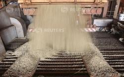 Granos de soja siendo descargados de un camión en la industria agricultural Alvorada, en la ciudad de Primavera do Leste, Brasil, 6 de febrero de 2013. El grupo de la industria brasileña de soja, Abiove, elevó el lunes su proyección para la nueva cosecha de soja 2014/2015 a 93,06 millones de toneladas, desde los 92,69 millones de toneladas previstas anteriormente. REUTERS/Paulo Whitaker