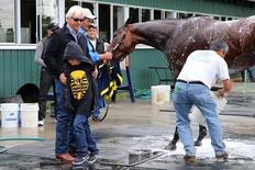 American Pharaoh is given a bath after workouts as trainer Bob Baffert and son Bode Baffert look on in preparation for the 2015 Belmont Stakes at Belmont Park. Jun 4, 2015; Elmont, NY, USA; Anthony Gruppuso-USA TODAY Sports