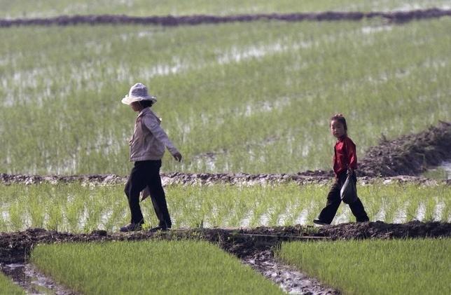 6月16日、朝鮮中央通信社(KCNA)は、北朝鮮がこの100年で最悪の干ばつに見舞われており、農作物に甚大な被害が出ていると伝えた。写真は昨年5月の水田の様子。シヌイジュ(北朝鮮)近郊で2014年5月撮影(ロイター/Jacky Chen)