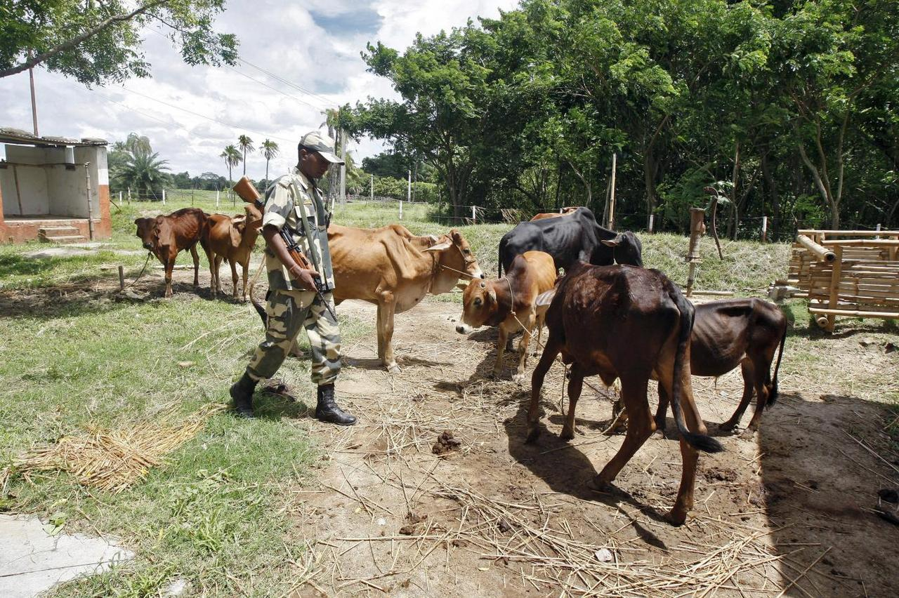 India's push to save its cows starves Bangladesh of beef