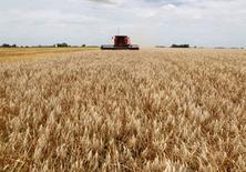 Una cosechadora de granos en un trigal en General Belgrano, Argentina, dic 18, 2012. La cosecha de trigo del ciclo 2015/16 de Argentina sería de 11 millones de toneladas, por debajo de los 11,1 millones estimados previamente, dijo el viernes el Departamentos de Agricultura de Estados Unidos (USDA, por su sigla en inglés).   REUTERS/Enrique Marcarian