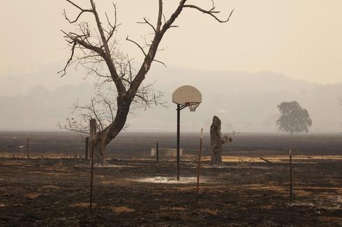 California's charred landscape