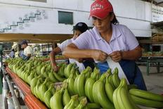 Workers label bananas at a banana farm outside Guayaquil February 23, 2012. REUTERS/Guillermo Granja (ECUADOR - Tags: AGRICULTURE BUSINESS) - RTR2YCIQ