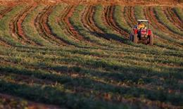 Funcionário regando plantação em Santo Antônio do Jardim, São Paulo.  12/02/2014     REUTERS/Paulo Whitaker