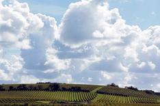 A Camblanes près de Bordeaux. Scientifiques et viticulteurs ont mis les bouchées doubles pour dénicher des cépages permettant de préserver les spécificités de leur nectar malgré le réchauffement climatique. Aujourd'hui, dans le vignoble bordelais, les vendanges se font en moyenne 10 jours à deux semaines plus tôt que dans les années 1980, les raisins sont plus riches en sucre, leur pH est plus élevé et le degré d'alcool supérieur entraîne des modifications dans le profil aromatique. /Photo prise le 8 octobre 2015/REUTERS/Regis Duvignau