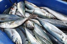 Imagen de archivo de unos pescados en un muelle de la Reserva Nacional Paracas en Ica, Perú, mar 15, 2015. Perú autorizó el inicio de una segunda temporada de captura de anchoveta en la mayor zona pesquera local que usa el recurso para la fabricación de harina de pescado, clave para la industria local, dijo el miércoles el Gobierno.   REUTERS/ Mariana Bazo