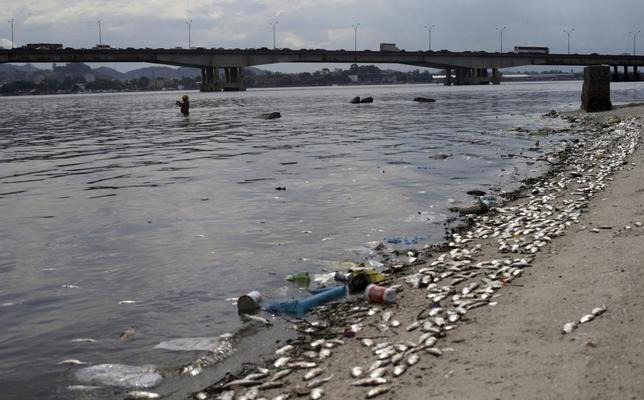 1月13日、2016年リオデジャネイロ五輪のセーリング競技などが行われるグアナバラ湾で、魚が大量死して打ち上げられているのが発見された(2016年 ロイター/Ricardo Moraes)