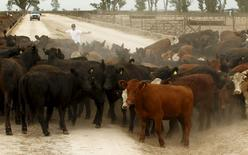 A rural worker herds livestock into a corral inside a cattle feedlot in Magdalena, south of Buenos Aires January 14, 2016. REUTERS/Enrique Marcarian