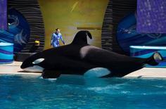 Treinadora e orca durante apresentação no parque SeaWorld em San Diego, Califórnia.   19/03/2014      REUTERS/Mike Blake