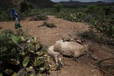 A woman walks past the carcass of a camel that has died due to the severe drought near the town of Qol Ujeed, on the border with Ethiopia, Somaliland April 17, 2016.  REUTERS/Siegfried Modola