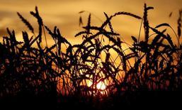 Пшеничное поле селькохозяйственной компании Солгонское. Агентство СовЭкон повысило прогноз урожая пшеницы в 2016 году до  64 миллионов тонн с 61,1 миллиона тонн. REUTERS/Ilya Naymushin/Files