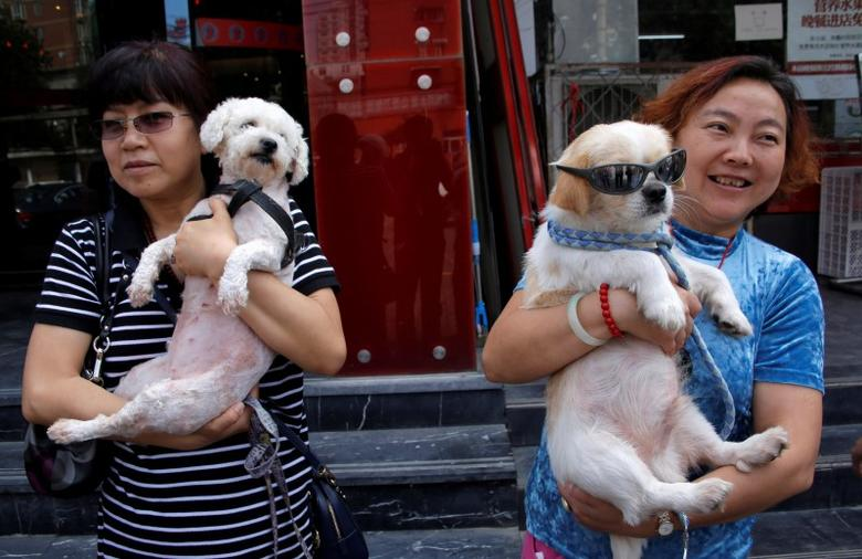 China's Yulin gears up for annual dog-meat festival amidst opposition |  Reuters.com