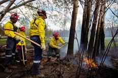 A group of South African firefighters work to uproot a tree as they remove hot spots from a massive wildfire outside of Fort McMurray, Alberta, Canada June 2, 2016. REUTERS/Topher Seguin/File Photo