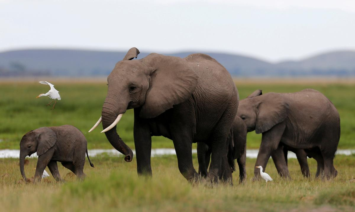 divorce in year of the elephant While the 40-50 percent divorce risk number is indeed correct, it actually applies to no one—or, at least, to very few.