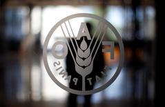 El logo de la FAO en su sede en Roma, Italia. 6 de septiembre de 2012. Una caída de los precios mundiales de los alimentos en julio luego de cinco incrementos mensuales sugiere que las materias primas agrícolas no se encarecerían mucho más en el futuro cercano, dijo el jueves el economista principal de la FAO. REUTERS/Alessandro Bianchi