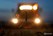 Комбайн собирает пшеницу в посёлке Новокавказский Ставропольского края 7 июля 2016 года. Агентство ИКАР сообщило, что вновь повысило прогноз урожая зерновых в этом году - на 2 миллиона тонн до 116 миллионов тонн. REUTERS/Eduard Korniyenko