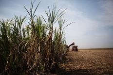 Uma colhedora corta cana-de-açúcar em um campo na propriedade do Grupo Moreno em Ribeirão Preto, região nordeste do Estado de São Paulo 15/09/2016 REUTERS/Nacho Doce