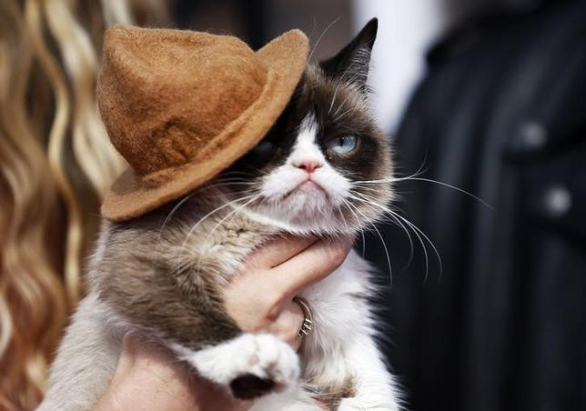 Grumpy cat arrives at the 2014 MTV Movie Awards in Los Angeles, California  April 13, 2014. REUTERS/Danny Moloshok
