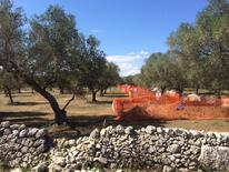 A site for the construction of a pipeline is seen in a grove of century-old olive trees in the southern Italian village of Melendugno, near Lecce, September 23, 2016. REUTERS/Giancarlo Navach