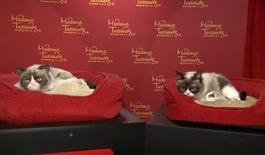 Grumpy Cat ao lado de sua estátua de cera no museu Madame Tussauds, de Londres
