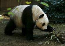 Panda Jia Jia vista em parque na China.      28/07/2015   REUTERS/Bobby Yip