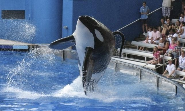 FILE PHOTO - SeaWorld killer whale Tilikum performs during the show ''Believe'' at SeaWorld Orlando in Orlando, Florida, U.S. on September 3, 2009.  REUTERS/Mathieu Belanger/File Photo