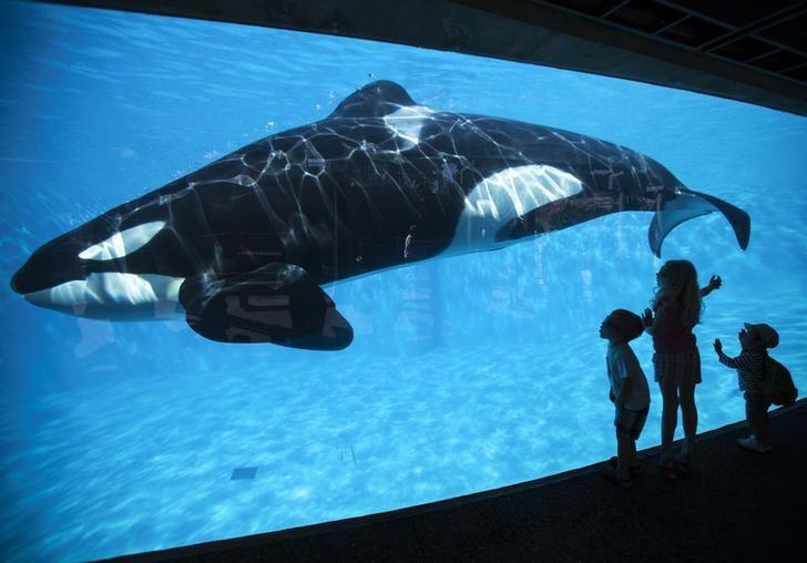 Young children get a close-up view of an Orca killer whale during a visit to the animal theme park SeaWorld in San Diego, California March 19, 2014   REUTERS/Mike Blake/File Photo - RTSNMNK