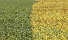 Plantação de soja em Primavera do Leste, Mato Grosso 07/02/2013 REUTERS/Paulo Whitaker