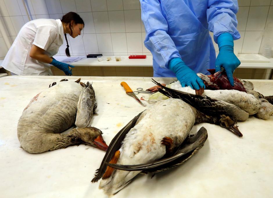 Proliferation Of Bird Flu Outbreaks Raises Risk Of Human Pandemic