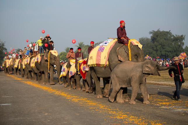 2月18日、ラオスのサイニャブーリー県で第11回を迎えた象祭りが開催され、花やカラフルな飾りを付けた数十頭の象のパレードが行われた(2017年 ロイター/Phoonsab Thevongsa)