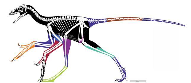 2月28日、1億6000万年前のジュラ紀に中国に生息していた羽毛恐竜「アンキオルニス」の化石をレーザー分析したところ、翼に現在の鳥の羽のような柔らかい繊維があったことが分かり、鳥のように飛べた可能性が浮上している。研究は、ネイチャー・コミュニケーションズ誌に掲載された。提供写真(2017年 ロイター/Xiaoli Wang, Michael Pittman et al)