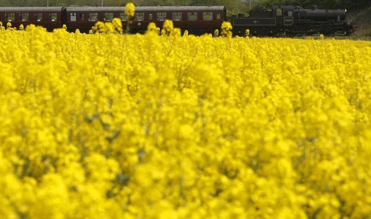 FILE PHOTO - A steam train passes a field of rapeseed in Loughborough, central England, May 7, 2008.   REUTERS/Darren Staples   (BRITAIN)