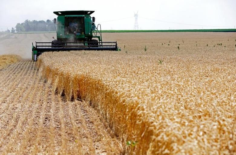 A combine drives over stalks of soft red winter wheat during the harvest on a farm in Dixon, Illinois, July 16, 2013. REUTERS/Jim Young/File Photo