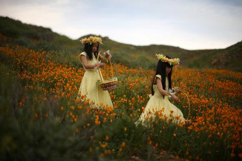 California's desert blooms as drought ends