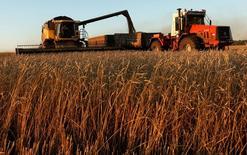 Уборка пшеницы на поле недалеко от Красноярска. Министерство экономики Турции говорит, что не запрещало импорт из России пшеницы и других связанных с ней продуктов, но этот импорт может полностью остановиться, так как турецкие компании предпочитают не импортировать из России.  REUTERS/Ilya Naymushin