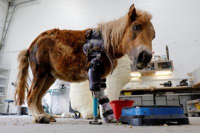 Helping amputee animals walk again