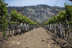 La production viticole mondiale a reculé de 3% en 2016 en raisons de mauvaises conditions météorologiques, à 267 millions d'hectolitres, une baisse cependant moins forte qu'attendu, a annoncé mardi l'OIV. /photo d'archives/REUTERS/Elijah Nouvelage