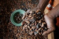A worker holds cocoa beans at SAF CACAO, a export firm in San-Pedro, Ivory Coast January 29, 2016. REUTERS/Thierry Gouegnon