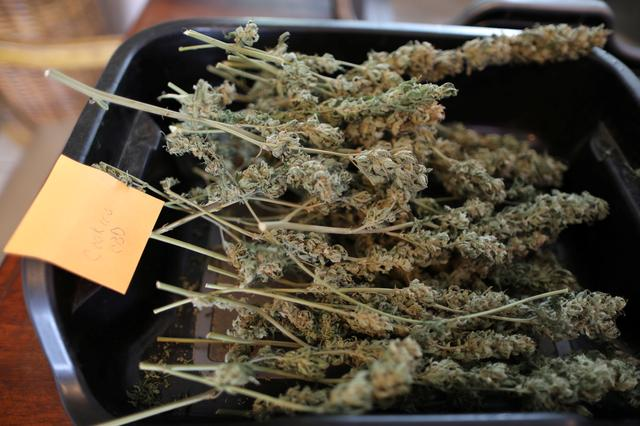 Hemp lies on the kitchen table at Sisters of the Valley near Merced, California, U.S., April 18, 2017. Picture taken April 18, 2017. REUTERS/Lucy Nicholson