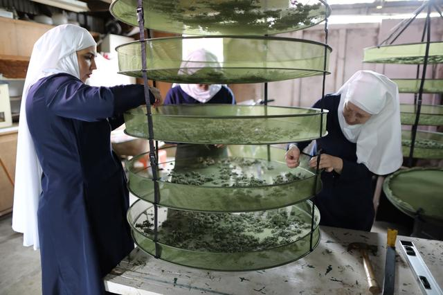 California ''weed nun'' Christine Meeusen, 57, who goes by the name Sister Kate (R), Desiree Calderon, who goes by the name Sister Freya, and India Delgado, who goes by the name Sister Eevee, check hemp that is drying at Sisters of the Valley near Merced, California, U.S., April 18, 2017. Picture taken April 18, 2017. REUTERS/Lucy Nicholson