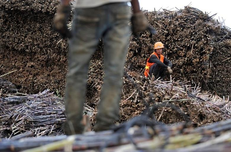 Labourers work on piles of sugarcanes at a sugar refinery in Menghai county, Yunnan province December 6, 2011.  REUTERS/Wong Campion/File Photo
